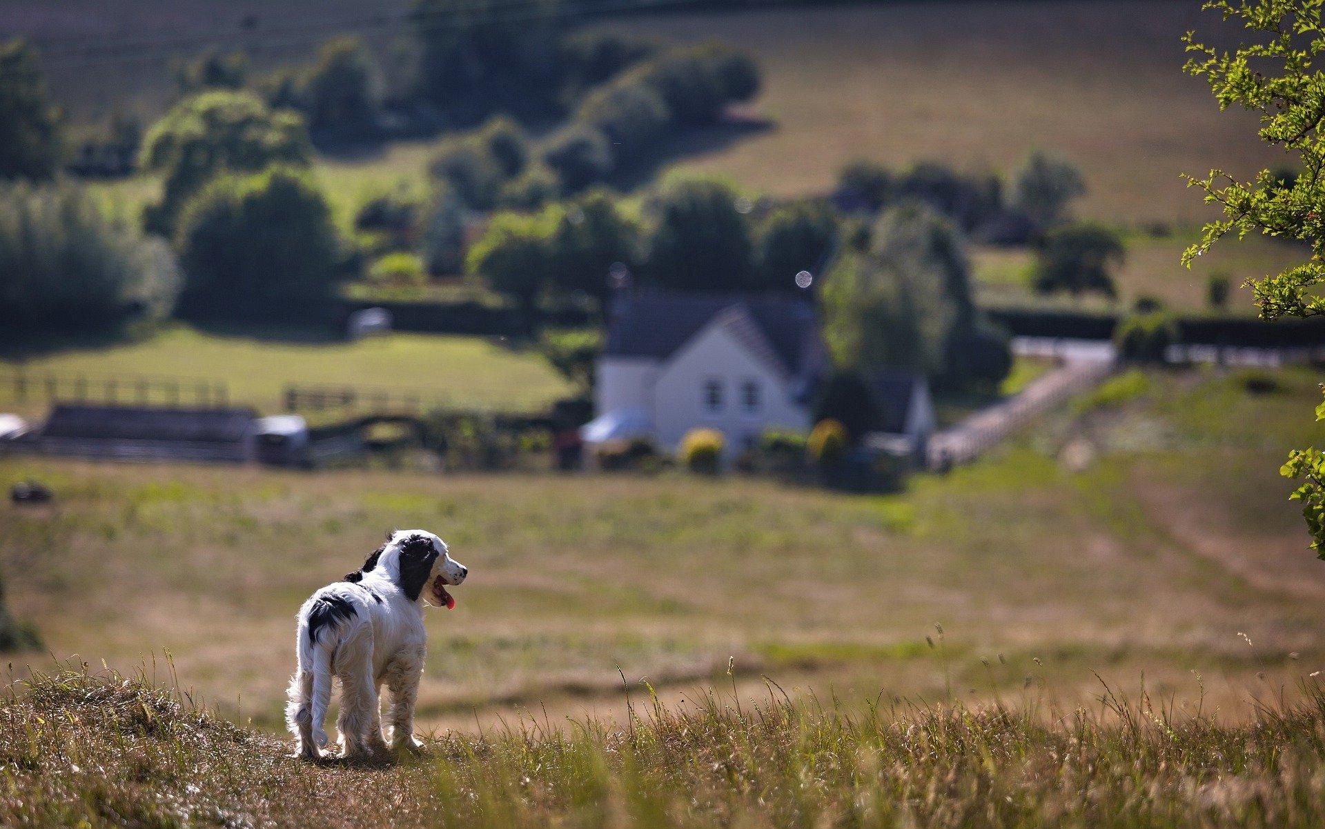 7 wskazówek, jak znaleźć dom przyjazny psom
